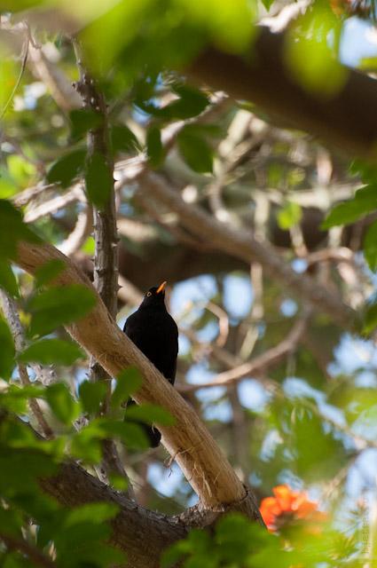 69. А это птичка, которая выгоняла меня пол всего парка. но всё же попалась в объектив.