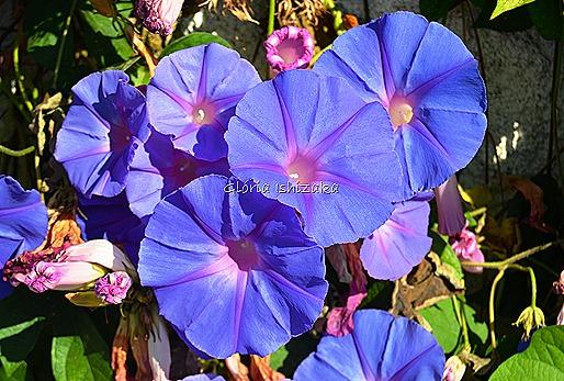Azul - Glória Ishizaka 4