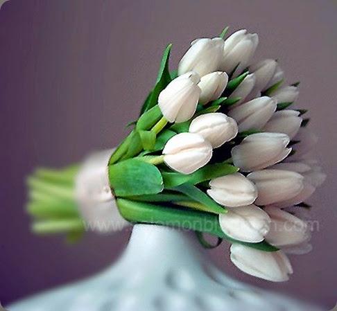 tulips solomon bloemen20