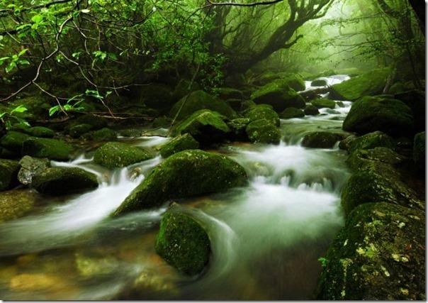 floresta no japão (5)