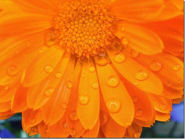 Lindas fotos da chuva (18)