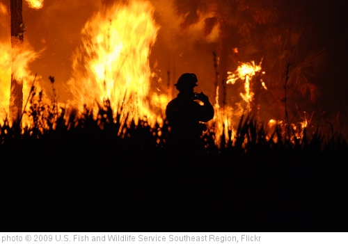 'Wildfire' photo (c) 2009, U.S. Fish and Wildlife Service Southeast Region - license: http://creativecommons.org/licenses/by/2.0/