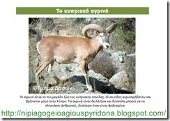 τα ζώα της Κύπρου(1)
