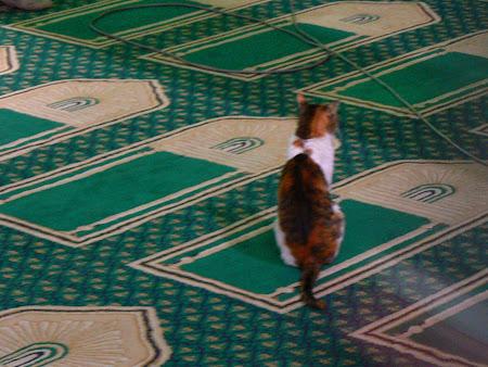 Moschee din Cairo Egipt