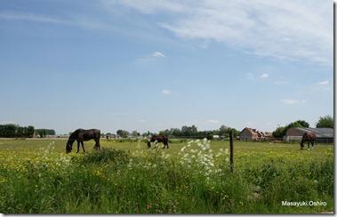 Lier郊外の風景