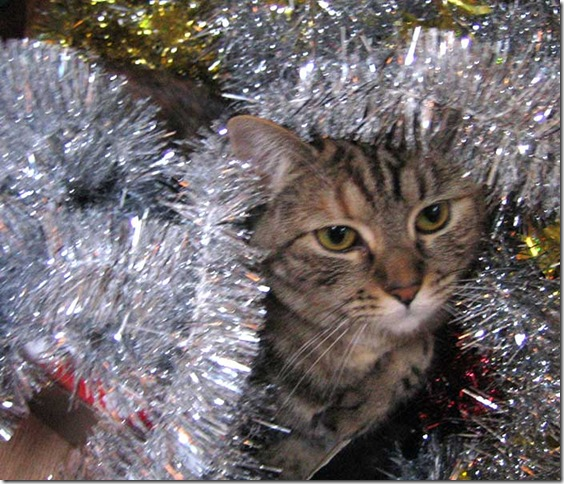 kitty-tinsel-1544