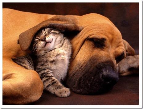 amicizia-insieme-oggi-esempre