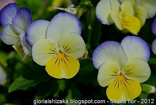 Glória Ishizaka - minhas flores - 2012 - 17