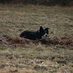 Hundetraining - Jessi 1