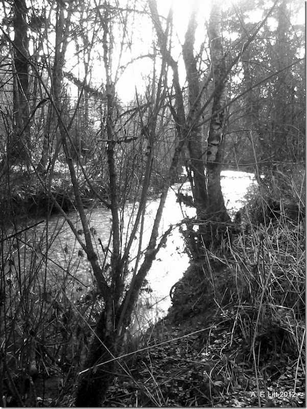 Johnson Creek.  Springwater Corridor.  Gresham, Oregon.  March 4, 2012.  Photo of the Day, March 5, 2012.