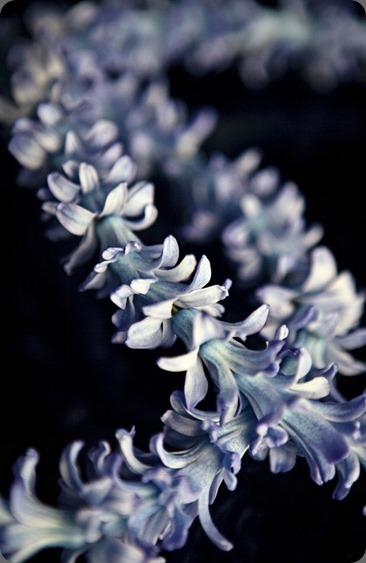 IMG_1084x hyacinth chain michelle rago
