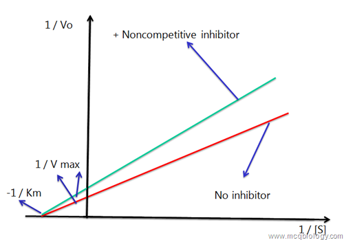Reversible non competitive inhibition graph