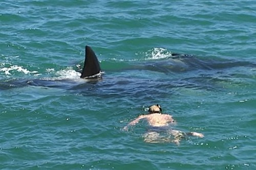 swimming with orca in wellington