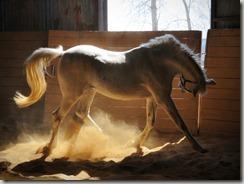 nightmare horses