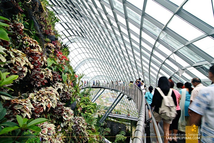 Cloud Forest Walkways at Gardens by the Bay