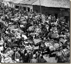 Pazari i kuajve të Korçës është më i madhi në Shqipëri. (foto, Melville Chater)