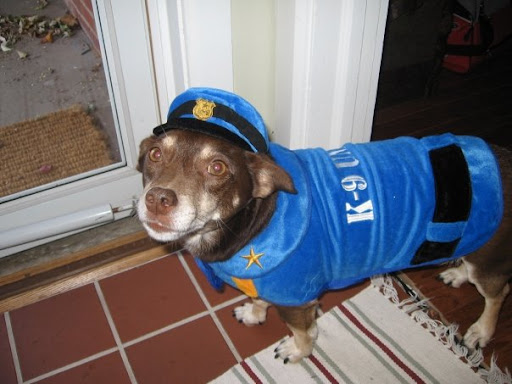And here is the infamous Gus, Pepper's adoptive brother. Why the uniform? When Pepper's adoptive mom Kelly is not at home policing her canine crew, she is hard at work fighting crime as a real life police officer!