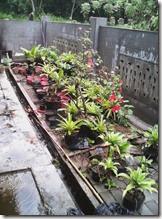 semakin banyak pot dan tanaman