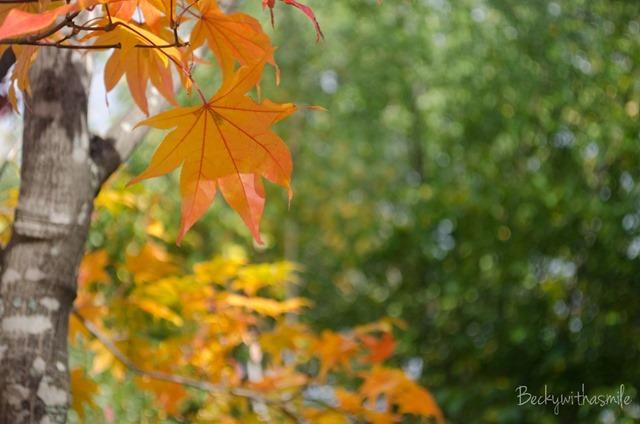 2013-10-12 Furano Fall Colors 030