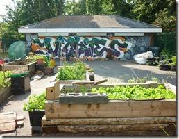 8 vickys veg growing group