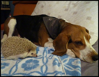 buster and hedgie