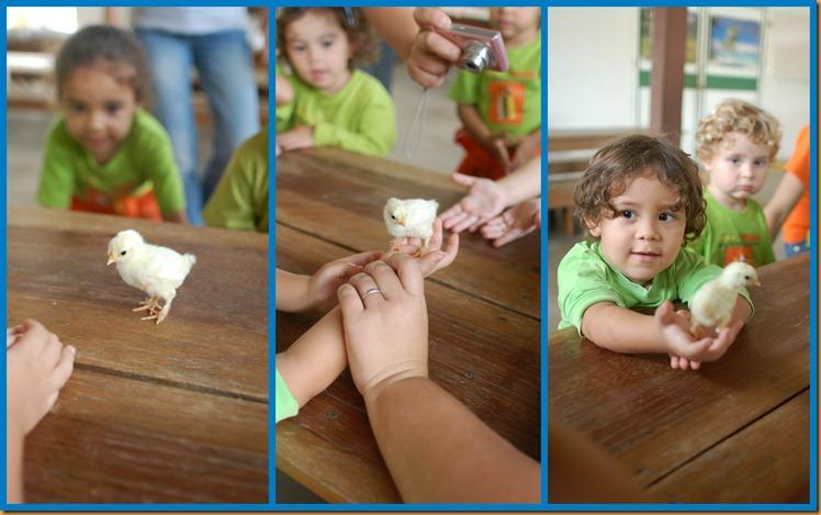 2012_04_25_Vira_Virou_Fazendinha_Seleção_0119