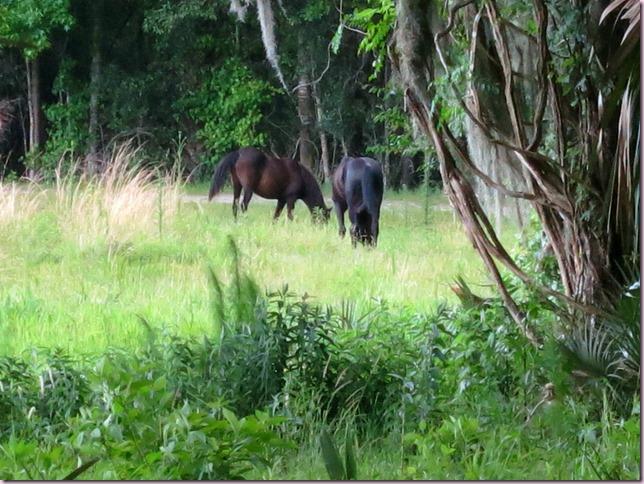 HorsesIMG_3077