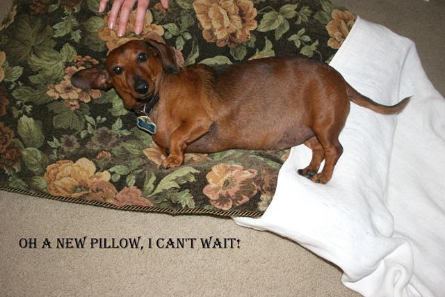 Rudi's Cushion 011-1
