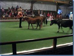 2946 Pennsylvania - Gettysburg, PA - Land of Little Horses