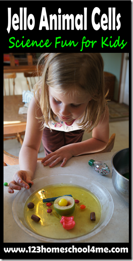 Jello Animal Cells - Science FUn for Kids #science #homeschooling