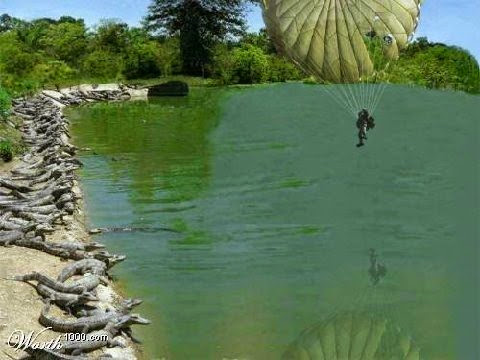 Parachuting towards alligators