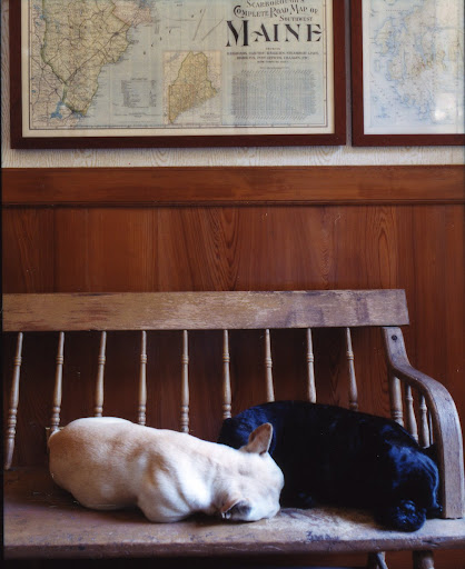 Martha's dogs look great with the maps in her Maine home, Skylands. (Martha Stewart Living, June 2007)