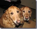 2004-12-04 -- CASEY, Cassie and Bachus
