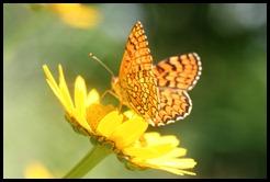 flor-silvestre_borboleta