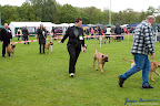 20100513-Bullmastiff-Clubmatch_30891.jpg