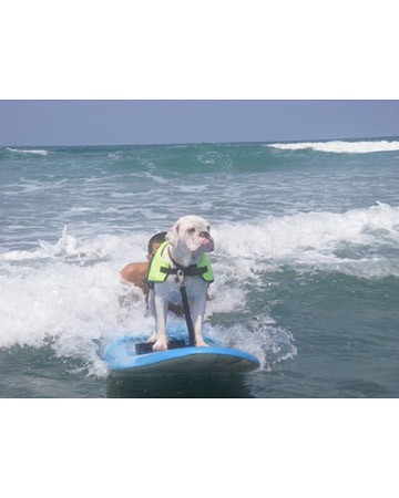 Summer sports can be appreciated by fur kids too- but be sure to take all safety precautions when embarking on such adventures.