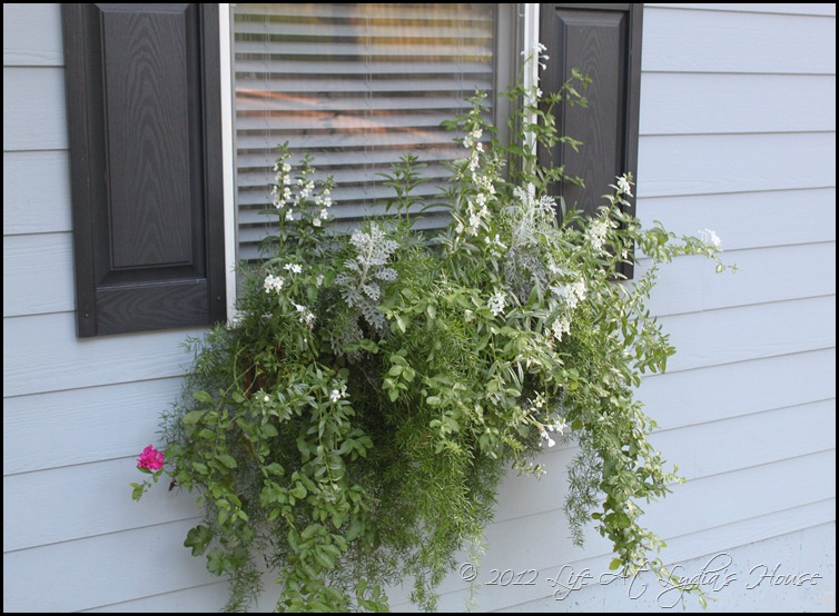 window box 8