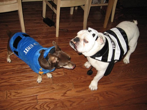 And here is Gus with his late friend Dyson, a rescued bulldog. Gus lost his best buddy last year, but thankfully for Pepper, Gus and Kelly have opened their hearts to a new family member.