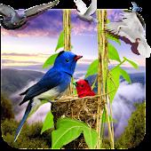 App Birds Live Wallpaper 3D version 2015 APK