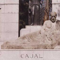 054 macho Cajal.jpg