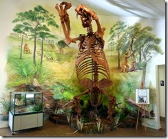 Giant Ground Sloth display
