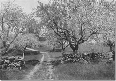 mohawktrail orchard