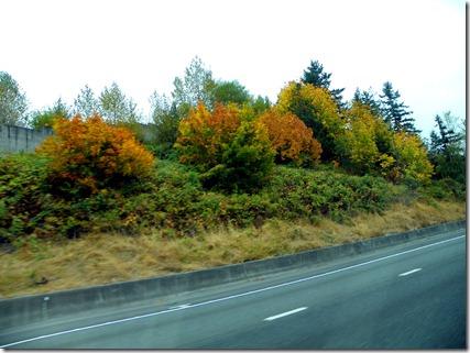 Fall colors!!!