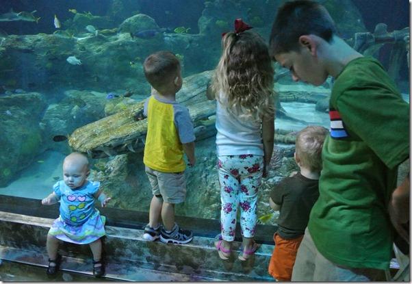 Sea Life Aquarium 166