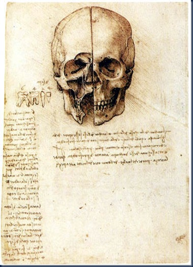Anatomía del  Cráneo LDV