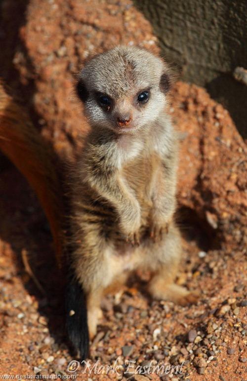filhotes recem nascidos zoo zoologico desbaratinando animais lindos fofos  (9)