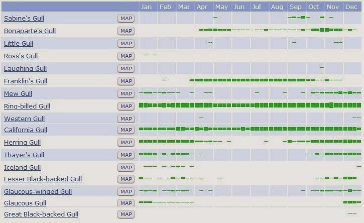 Gull Bar Chart 1