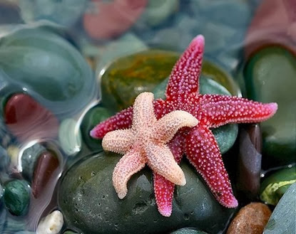 Amazing Pictures of Animals, Photo, Nature, Incredibel, Funny, Zoo, Starfish, Sea Stars, Asteroidea, Alex (7)