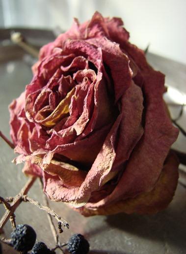 bloemen tot 2011 (77)