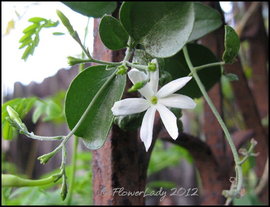 03-02-unkn-jasmine